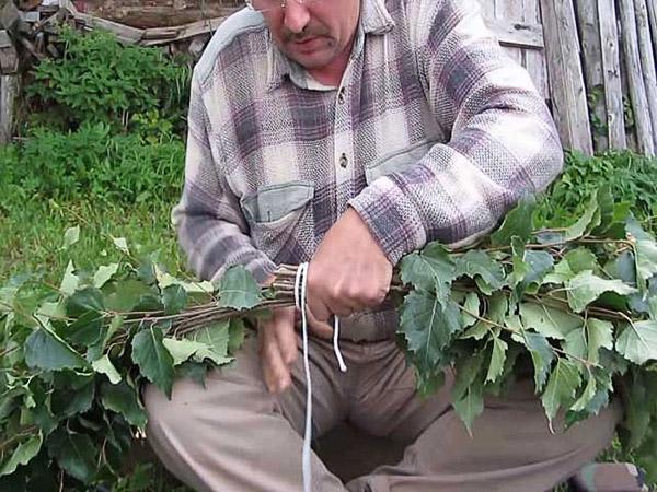 Заготовка дубовых веников для бани сроки